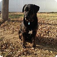 Adopt A Pet :: Charlie - Kirkland, WA