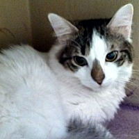 Adopt A Pet :: Salt - Cranford/Rartian, NJ