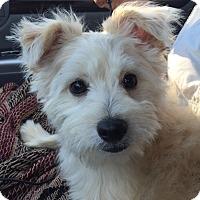 Adopt A Pet :: Dice - Orlando, FL