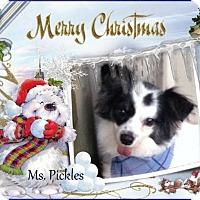 Adopt A Pet :: Ms. Pickles - Crowley, LA