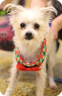 Small Dog Rescue Sacramento