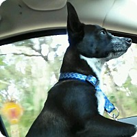 Adopt A Pet :: Finn - Windermere, FL