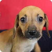 Adopt A Pet :: July - Waldorf, MD