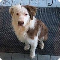 Adopt A Pet :: Zander - Westminster, MD