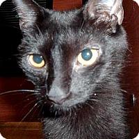 Adopt A Pet :: Tish - Phillipsburg, NJ