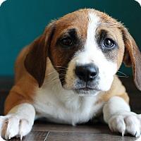 Adopt A Pet :: Ally - Waldorf, MD