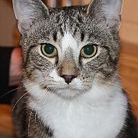 Adopt A Pet :: CharlieJoe - Columbus, OH
