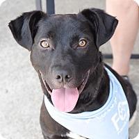 Adopt A Pet :: Boca - Homewood, AL