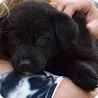 Adopt A Pet :: Monica $250 - Seneca, SC