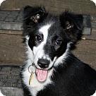 Adopt A Pet :: Pending! Quigley