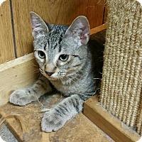 Adopt A Pet :: Legolas - Morganton, NC