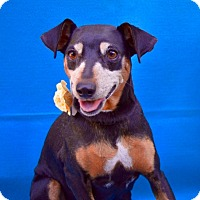Adopt A Pet :: Leilani Kai - Irvine, CA