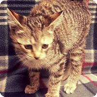 Adopt A Pet :: D.C. - Watauga, TX