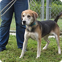 Adopt A Pet :: Maxi - Windsor, VA