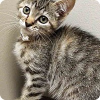 Adopt A Pet :: ADOPTED!!!   Bitsy - Shorewood, IL