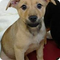 Adopt A Pet :: Marion - Aiken, SC