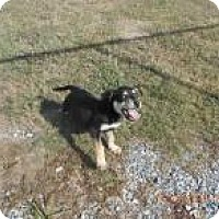 Adopt A Pet :: Cindy Lou (Adoption Pending) - Rexford, NY