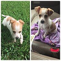 Adopt A Pet :: Tilly - Ocala, FL