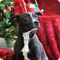 Adopt A Pet :: Matthew - Greensboro, NC