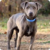 Adopt A Pet :: Mercedez - Waldorf, MD