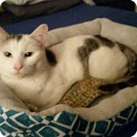 Adopt A Pet :: Eve - Barrington Hills, IL