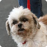Adopt A Pet :: Gretel - Palmdale, CA