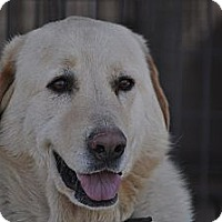 Adopt A Pet :: Jane - Pocahontas, AR