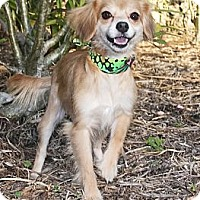 Adopt A Pet :: Smoochie - North Palm Beach, FL