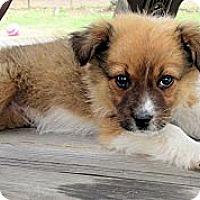 Adopt A Pet :: Kallie - Waller, TX