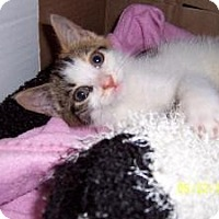 Adopt A Pet :: Fifi - Island Park, NY