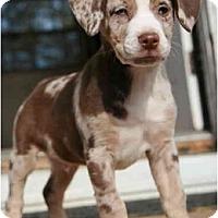 Adopt A Pet :: Cooper - Richmond, VA