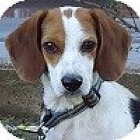 Adopt A Pet :: Bridge - Hamilton, ON