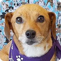 Adopt A Pet :: Tinker - Weatherford, TX