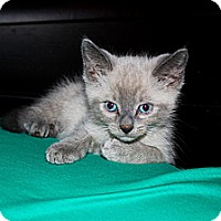 Adopt A Pet :: Jesse - Phoenix, AZ