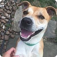Adopt A Pet :: Pepper -Adoption Pending - Kingwood, TX