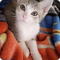Adopt A Pet :: Addy - Oviedo, FL