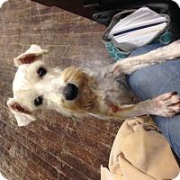 Adopt A Pet :: Nigel - Del Rio, TX