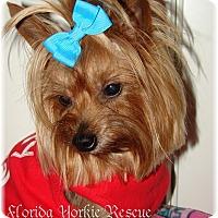 Adopt A Pet :: Bubba - Palm City, FL