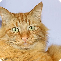 Adopt A Pet :: Tucker - Ann Arbor, MI