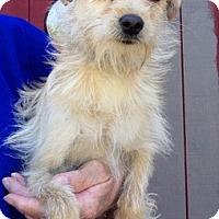 Adopt A Pet :: Felicia - Temecula, CA