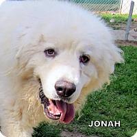 Adopt A Pet :: Jonah (Ritzy) - Lindsay, CA
