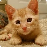 Adopt A Pet :: Sebastian - Buford, GA
