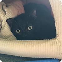 Adopt A Pet :: Joey - Cheltenham, PA