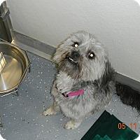 Adopt A Pet :: BACCA - Sandusky, OH