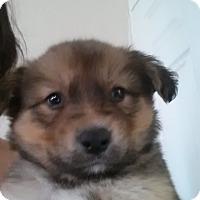 Adopt A Pet :: Bundle of Cuties - El Cajon, CA