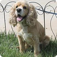 Adopt A Pet :: Smurfette - Corona, CA