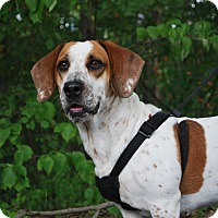 Adopt A Pet :: Gracie - New Castle, PA