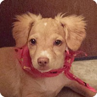 Adopt A Pet :: Jingle AD 10-22-16 - Preston, CT