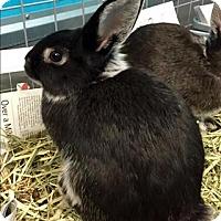 Adopt A Pet :: Tic - Mipiltas, CA