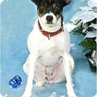 Adopt A Pet :: Daphne - Tomball, TX